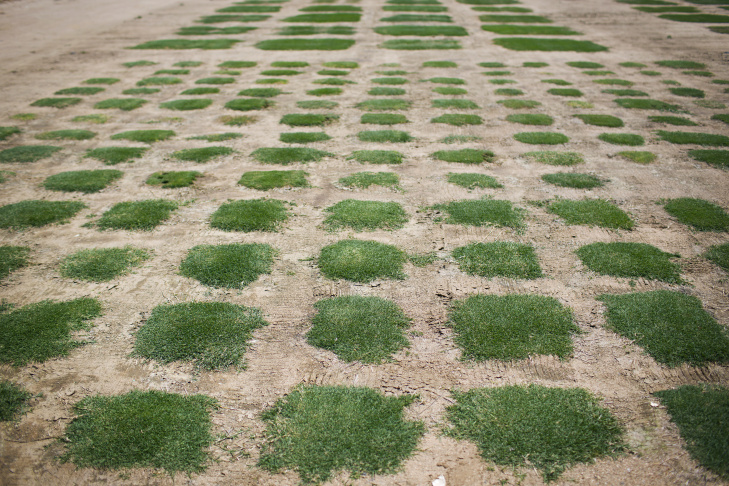Dr. James Baird, assistant Cooperative Extension specialist in turfgrass management at UC Riverside, stands on a synthetic and natural blend of turf inside the Turfgrass Research Facility on Monday afternoon, May 11, 2015.