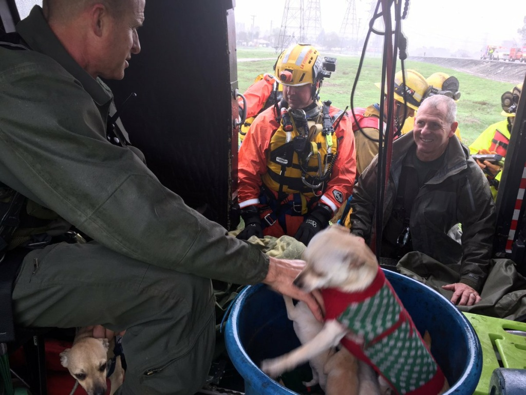Two stranded women — and a litter of puppies — were rescued from the San Gabriel river bed on Friday, Dec. 16, 2016.