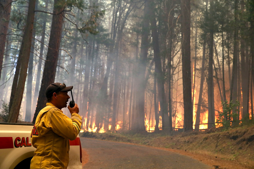 A Cal Fire firefighter monitors the Rim Fire as it burns through a grove of trees on August 25, 2013 near Groveland, California.