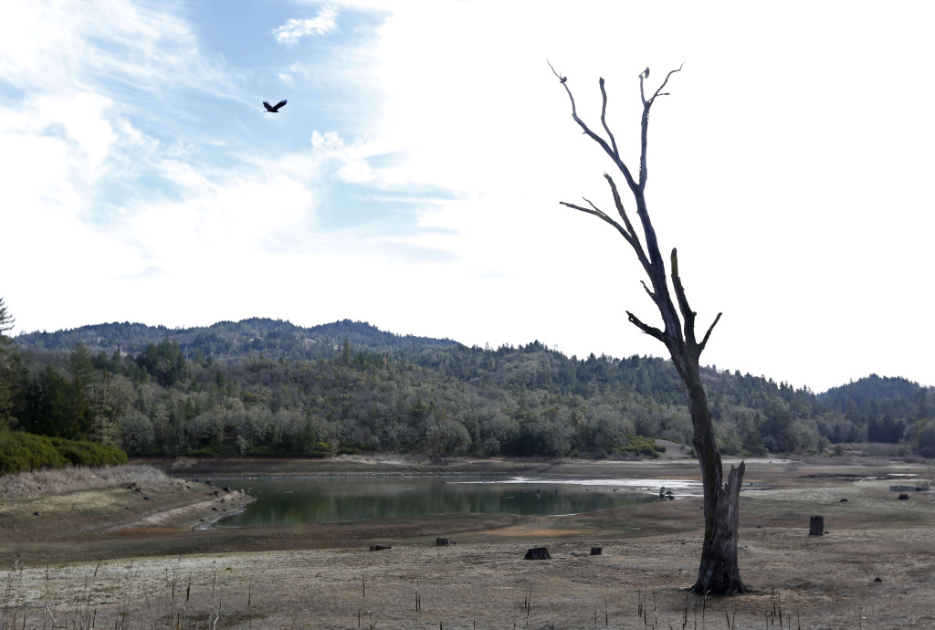 In this photo taken Tuesday, Feb. 4, 2014, is the Centennial Reservoir, one of the two water sources for the city of Willits, Calif. In the midst of a historic drought, the reservoir is only one-third full, forcing Willits city leaders to ban lawn watering, car washing, and mandated all residents to cut water use.