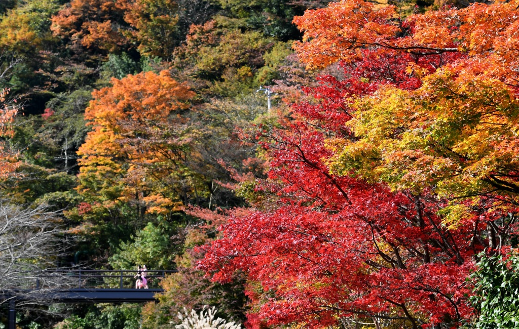 People walk past trees in autumn in Hakone, Kanagawa prefecture, some 100 kilometers west of Tokyo, on November 17, 2016.