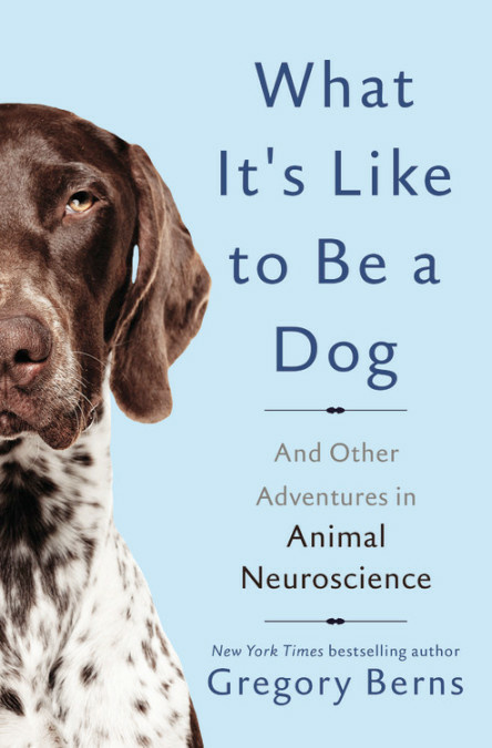 What It S Like To Be A Dog Gregory Berns