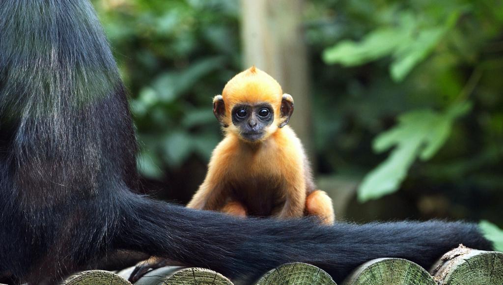2 baby monkeys debut at the LA Zoo | 89.3 KPCC