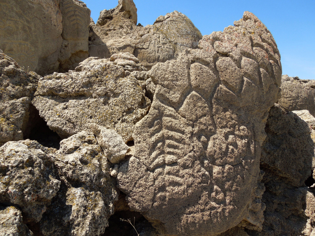 This May 2012 photo provided by the U.S. Geological Survey shows ancient carvings on limestone boulders in northern Nevada's high desert near Pyramid Lake. The carvings have been confirmed to be the oldest recorded petroglyphs in North America - at least 10,500 years old. The findings were published August 2013 in the Journal of Archaeological Science. This site was once the shoreline of the now dried up Winnemucca Lake.