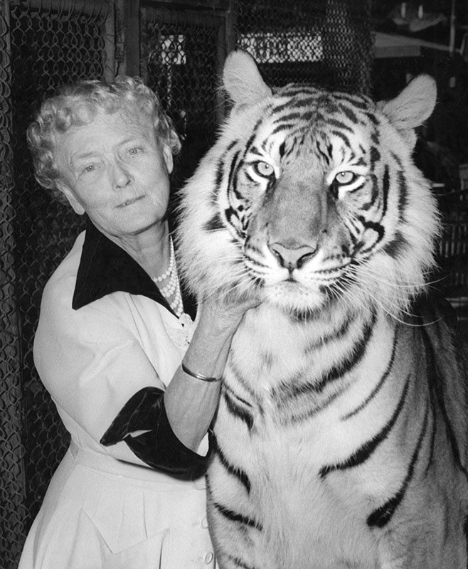 Mabel Stark, one of only a handful of women trainers to work with big cats, she was a featured act in many shows and circuses including Ringling Brothers Barnum and Bailey Circus and later as a trainer at Jungleland in Thousand Oaks.