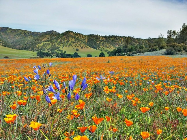 Wildflowers Highway in the newly designated Berryessa Snow Mountain National Monument.
