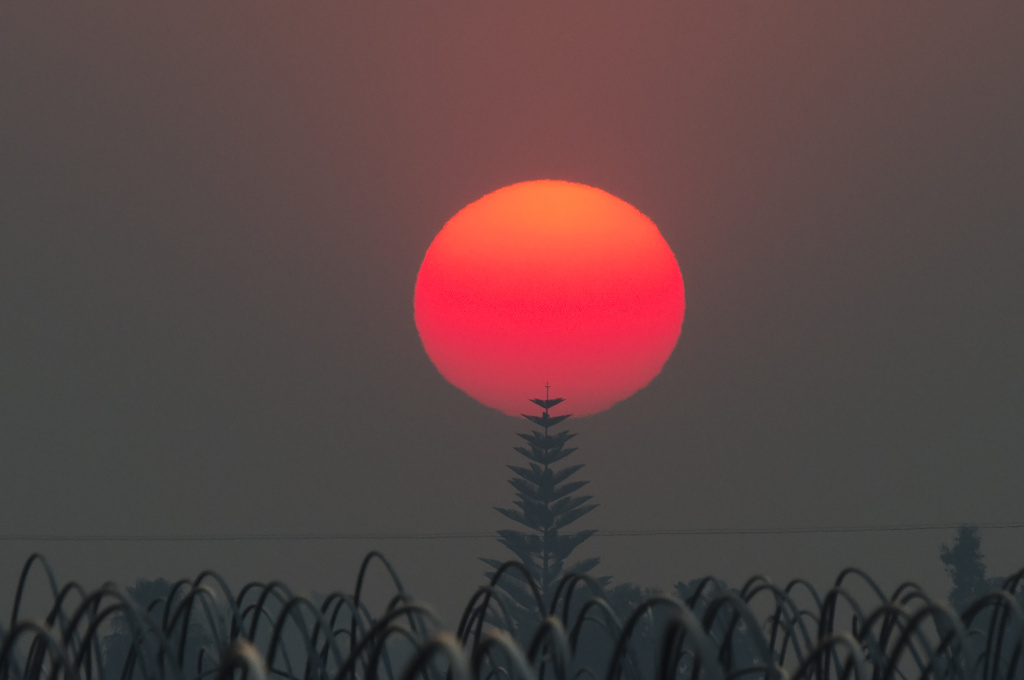 The sun, a deep red/orange from the smoke from the Thomas Fire, sets over an agricultural field in Santa Paula, California, December 12, 2017.