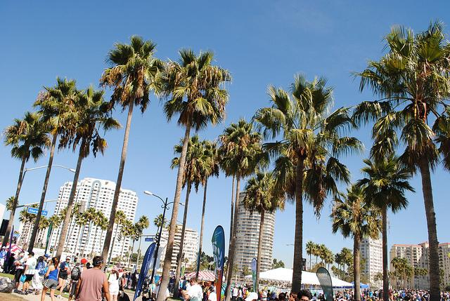 Palm Trees In Long Beach CA
