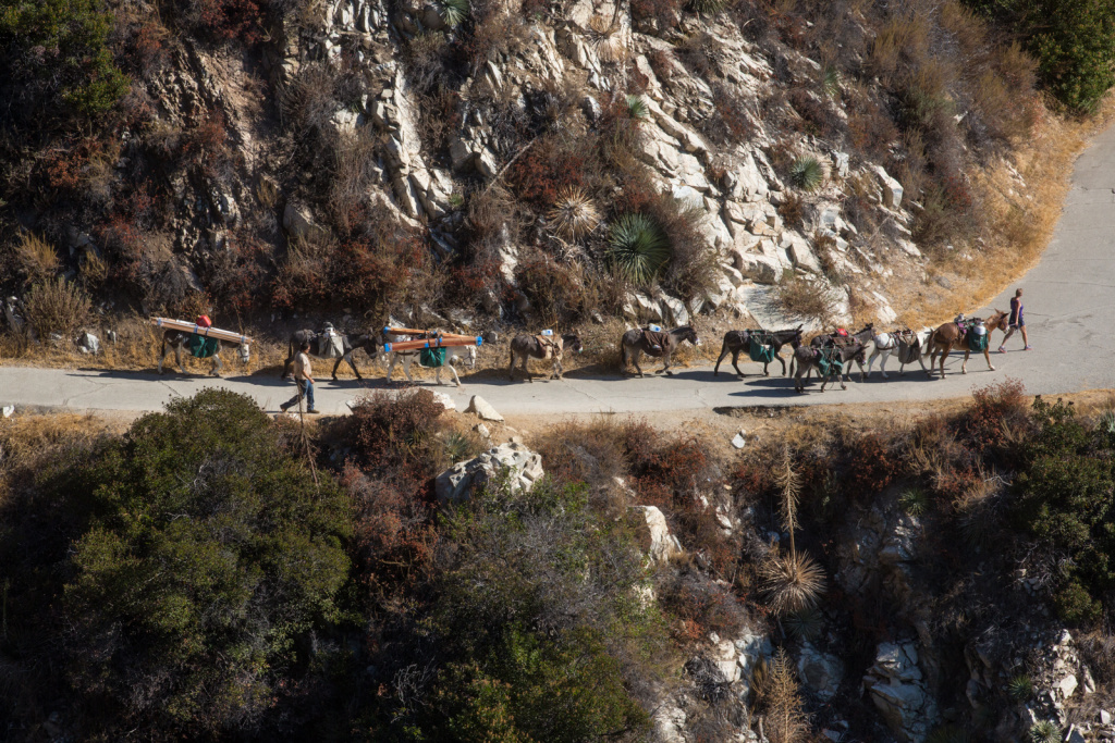Deb Burgess leads her pack of donkeys and one mule down from Chantry Flat in the Angeles National Forest. The entire packing trip takes about eight hours. The area is part of what might be included in the San Gabriel National Recreation Area.
