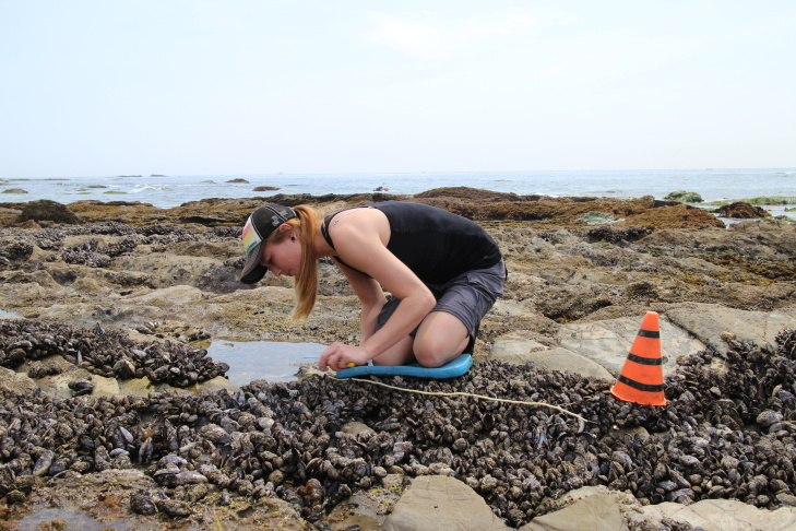 A sea star at Crystal Cove State Park in Laguna Beach has lost three arms, possibly as a result of wasting disease.