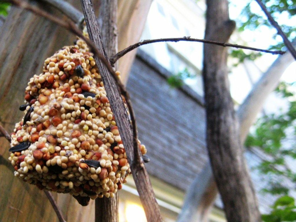 A homemade bird feeder.