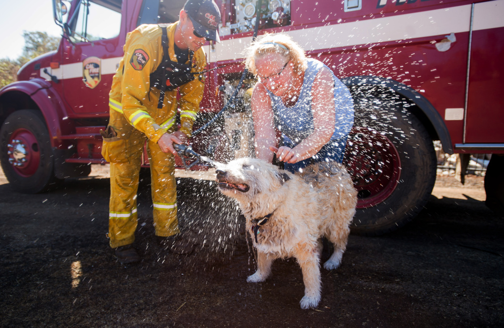 Jesse, the dog, cools off with help from Cal Fire Santa Clara firefighter Tim Quickel and owner Claudia Uyeno near Middletown, Calif., Monday, Sept. 21, 2015, as homeowners sort through the destruction left by a wildfire. Gov. Jerry Brown requested a presidential disaster declaration on Monday, noting that more than 1,000 homes had been confirmed destroyed, with the number likely to go higher as assessment continues. (AP Photo/Noah Berger)