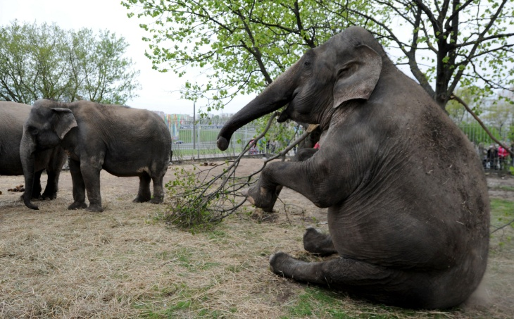 BELARUS-ANIMALS-ELEPHANTS-CIRCUS-FEATURE