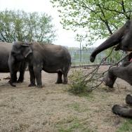 BELARUS-ANIMALS-ELEPHANTS-CIRCUS-FEATURE