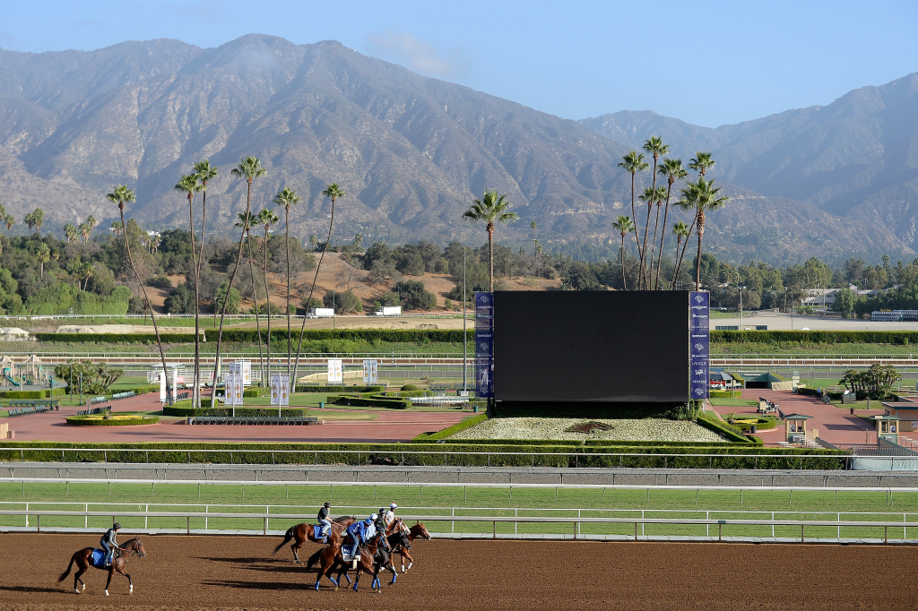 Horses are led to the track to train in preparation for the 2014 Breeder's Cup at Santa Anita Park on October 27, 2014 in Arcadia, California.