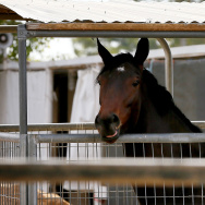 Racehorses Outbreak