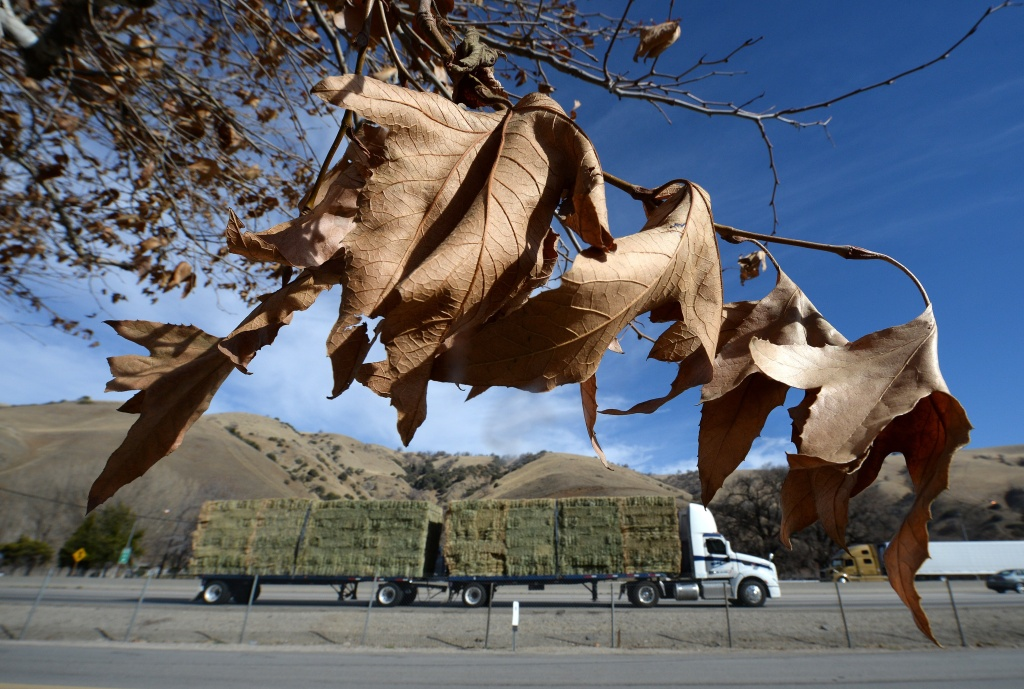 A truck transports a load of hay through the dry mountains of the Tejon Pass in Lebec, California, January 22, 2014. Amid California's driest year on record, Governor Jerry Brown has declared a drought emergency in the state. The lack of rain has put the state's ranchers under pressure, forcing them to buy the hay which they would normally grow themselves to feed their animals.