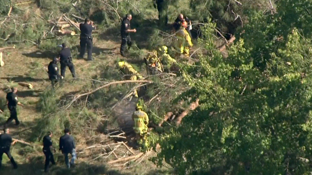 Firefighters and police on scene where a tree fell and injured eight children.