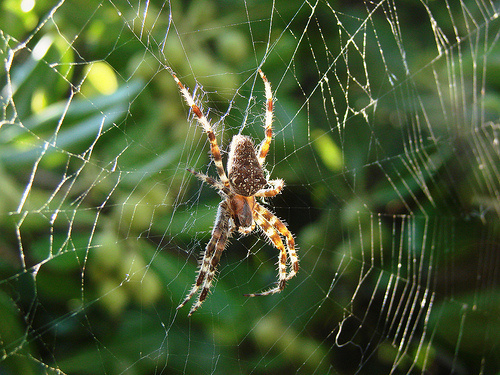 A huge spider perched on its web