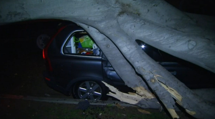 Powerful winds knocked a tree over onto a car in West Hollywood on Thursday night.