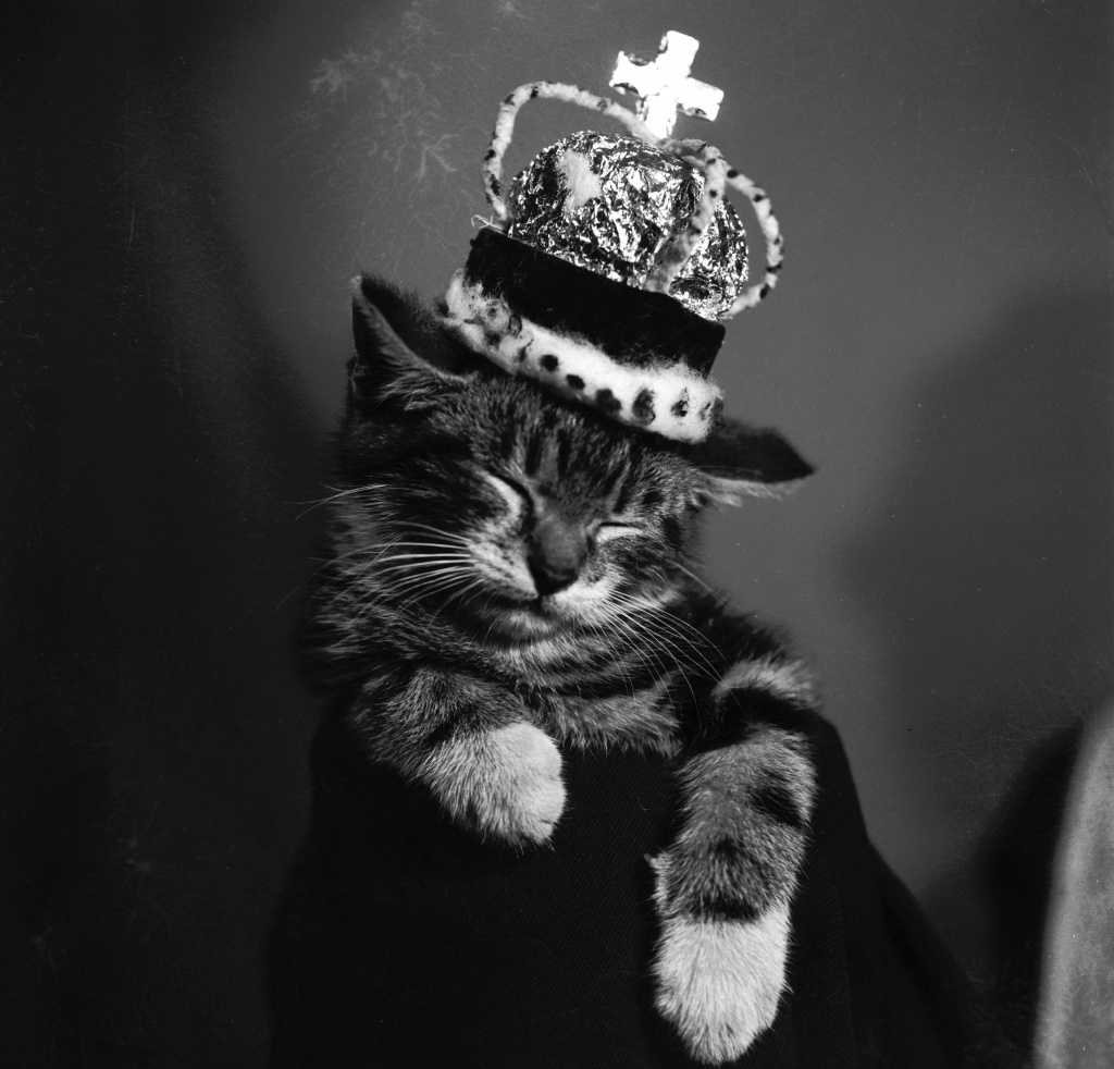 1955:  A sleeping kitten wearing a miniature crown.  (Photo by Charles Ley/BIPs/Getty Images)