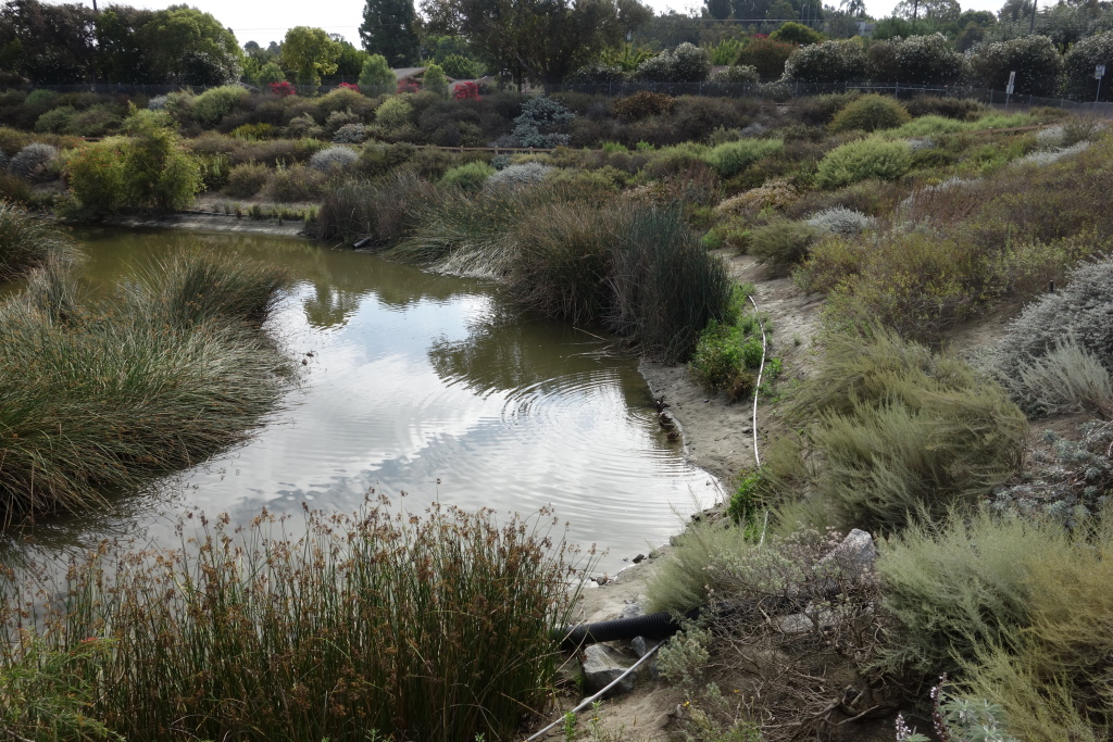 The engineered Dominguez Gap Wetlands in Long Beach filters stormwater and runoff from the Los Angeles River, then the water is siphoned under the river to a spreading ground to the west.