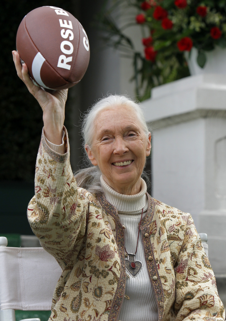 Chimpanzee expert Jane Goodall holds a football after being named as the grand marshal of Pasadena's 2013 Rose Parade. Celebrity - and the interest of the annual event's president - are the common link between the primate scientist and a long line of predecessors (AP Photo/Nick Ut)