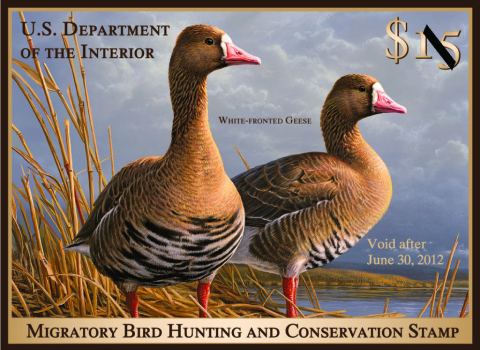 Image of the 2011 Federal Duck Stamp