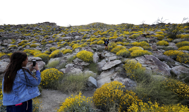 In this March 19, 2017, photo, visitors walk among the poppy bloom at Antelope Valley California Poppy Reserve in Lancaster, Calif. Rain-fed wildflowers have been sprouting from California's desert sands after lying dormant for years - producing a spectacular display that has been drawing record crowds and traffic jams to desert towns.