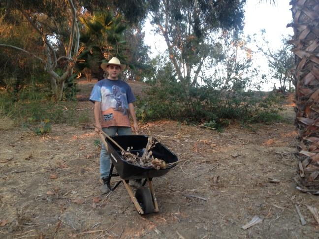 Artist Ben Wolf Noam collects foliage for his paintings at Elysian Park