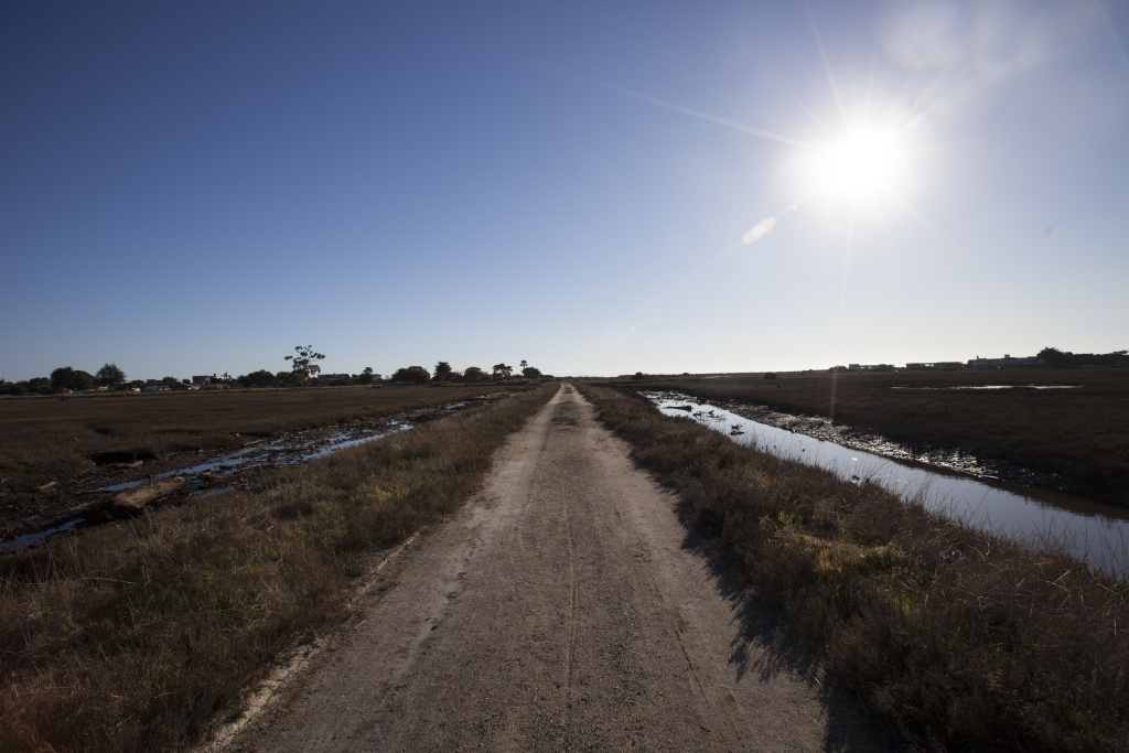 The channels of water that wind their way through the Carpinteria salt marsh reserve run towards the ocean.