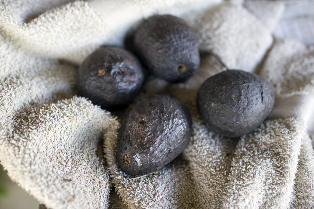 The 57-acre Petty Ranch in Saticoy, Calif. produces avocados, lemons and other crops. The ranch will soon begin producing figs, which are more drought-tolerant.
