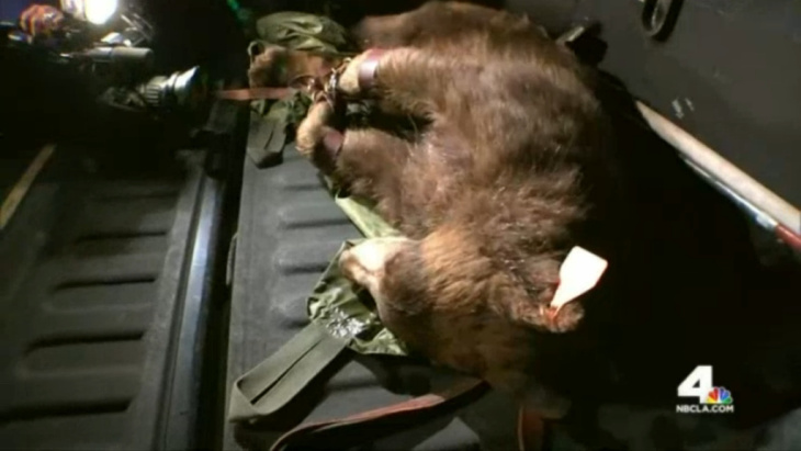 On Monday, a bear was tranquilized and relocated after first being spotted near the campus of Los Angeles Mission College in Sylmar. Just a day before, wildlife officials had to capture another young bear boldly venturing into a neighborhood in Duarte.