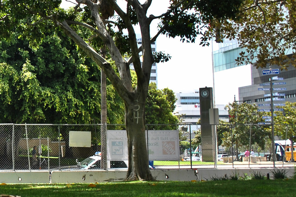File: A ficus tree shades a park in Los Angeles.