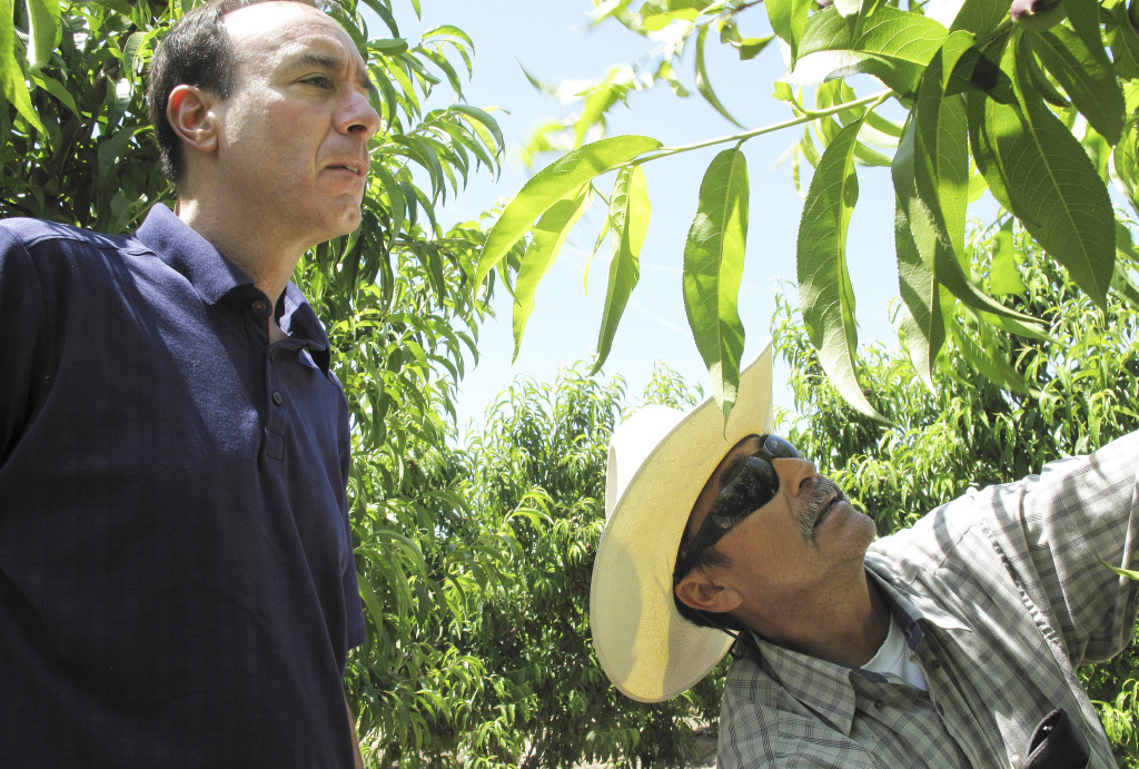 In this April 29, 2014 file photo, Dan Gerawan, owner of Gerawan Farming, Inc., left, talks with crew boss Jose Cabello in a nectarine orchard near Sanger, Calif. The Agricultural Labor Relations Board late Friday, April 15, 2016 unanimously affirmed an administrative law judge's earlier decision in favor of the United Farm Workers in a decades-long fight with Gerawan Farming Inc., one of the nation's largest fruit growers. The board supported the judge's ruling that the company interfered with its employees' vote on whether to reject union representation.