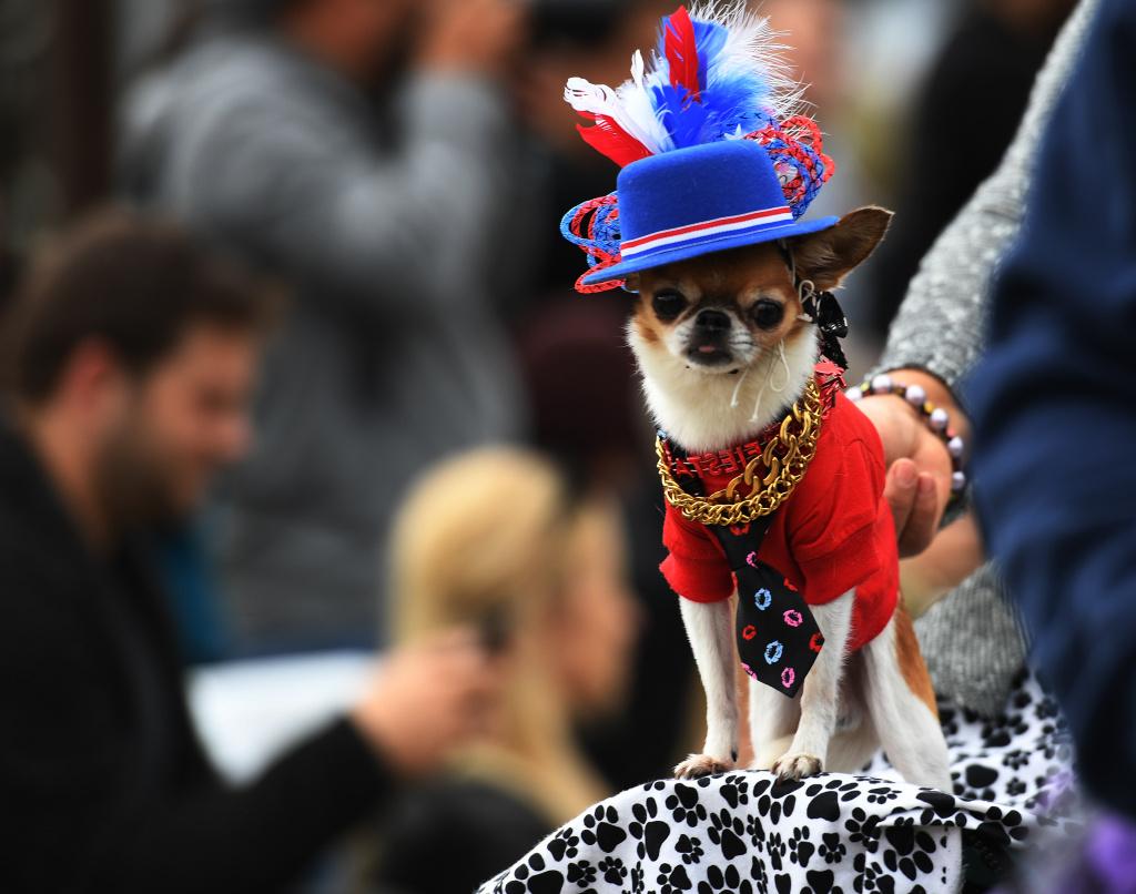 A participant in Long Beach's annual Haute Dog Howl'oween parade.