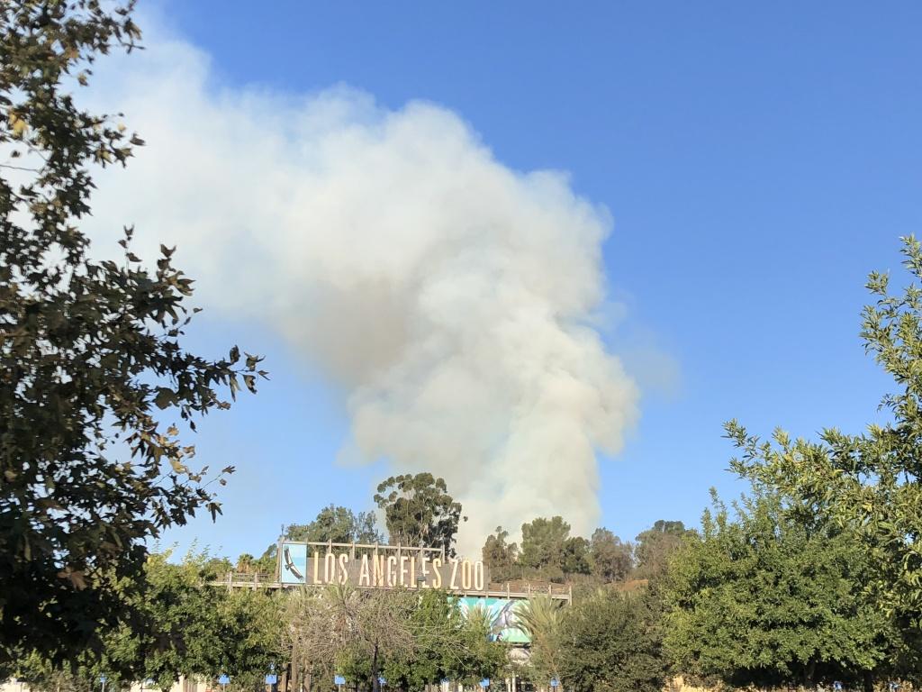 A fire burns behind the Los Angeles Zoo, in Griffith Park. (Matt Tinoco/KPCC)