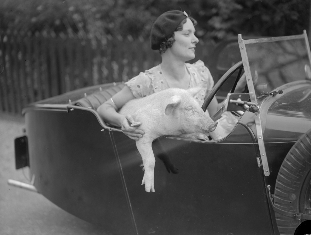 September 1934: Mrs C Wylds behind the wheel with her pet pig at Terling in Essex.