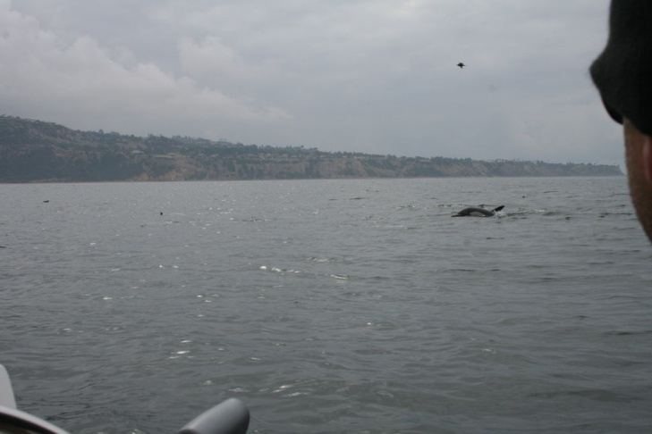 Grey days in Santa Monica Bay mean nobody else is out there except you and the dolphins.