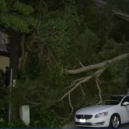 High winds knock trees onto cars in LA