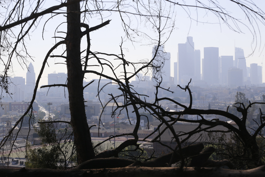 The Los Angeles skyline is seen through burned trees on Dec. 14, 2017, after a brush fire erupted in the hills in Elysian Park in Los Angeles.