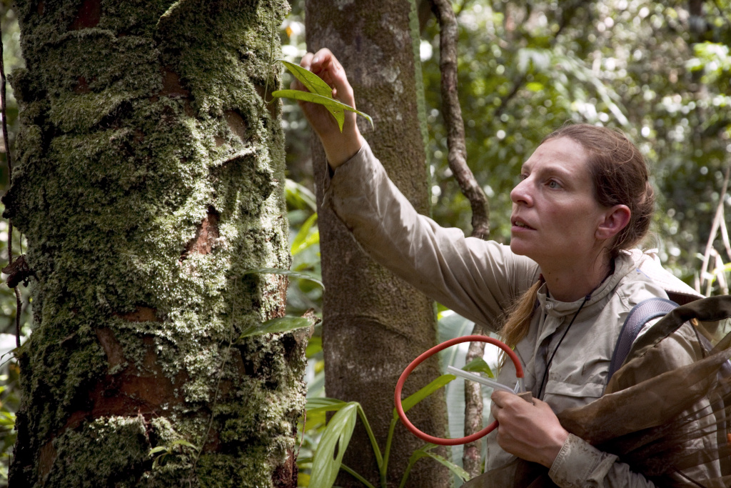 Doctor Adeline Soulier-Perkins of the National Museum of Natural History captures insects to study biodiversity in the French South American territory of Guiana. AFP PHOTO JODY AMIET