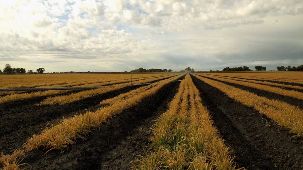 California's drought is a continuing concern for the state's farmers, many of whom are having to let fields go fallow.