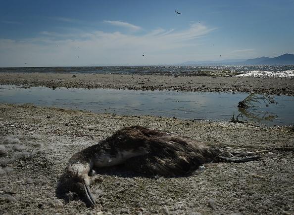 Slideshow Salton Sea California S Largest Lake Threatened By Urban Water Transfer 89 3 Kpcc