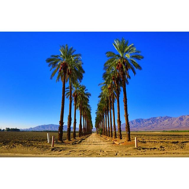 Oasis, California.