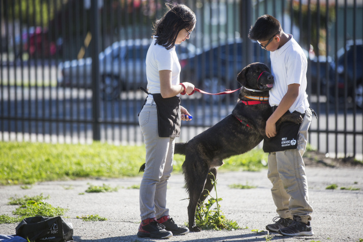 Seventh grader Xochilt Nuñez brushes Rockwell during spcaLA's humane education after-school program at Bunche Middle School in Compton on Tuesday afternoon, March 8, 2016. Students are paired with canines as part of an after school program called