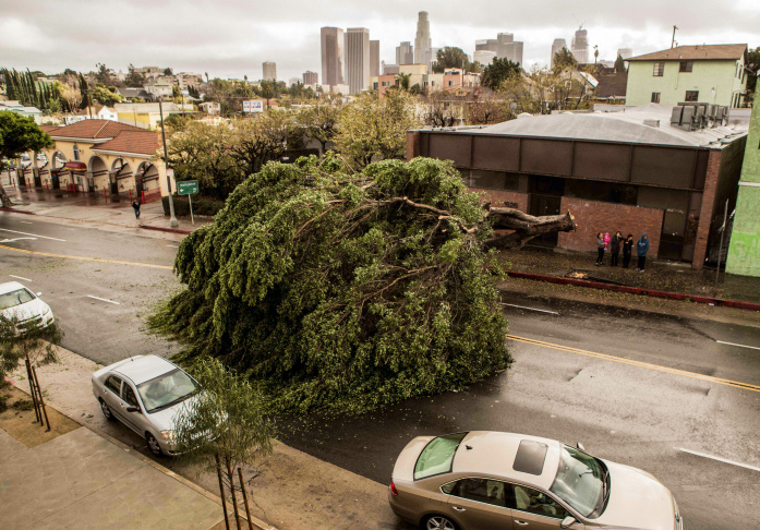 A large tree was toppled by strong winds on Temple Street, just missing several parked cars, following a rainstorm with the downtown Los Angeles skyline in the background Sunday, Jan. 31, 2016. In the San Diego area, a motorist was fatally struck by a tree that was knocked down by powerful winds as a winter storm moves across California, bringing downpours, wind and snow, authorities said. Strong winds downed dozens of trees and power poles and ripped off rooftops across Southern California.
