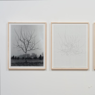 "The first triptych (an artwork made up of three panels) in Charles Gaines' ""Walnut Tree Orchard"" series (1975–2014). Courtesy the artist and Susanne Vielmetter Los Angeles Projects."