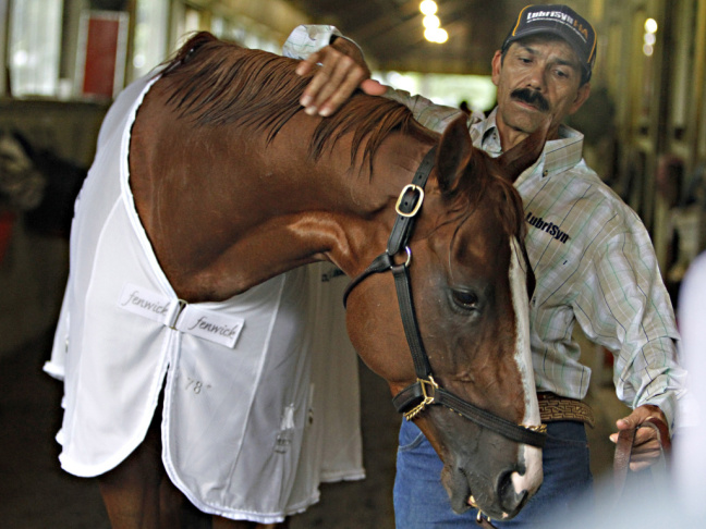 A rider warms up a race horse during a morning workout session at Los Alamitos Race Course. With the success of California Chrome, local race horse tracks are seeing an increase in interest from the public.
