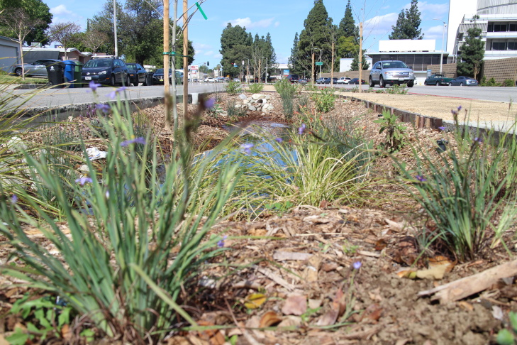 Woodman Avenue's median retrofit captures stormwater from 120 square acres of surrounding Los Angeles.
